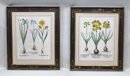 AFTER BASILIUS BESLER A PAIR OF FIRST QUARTER 17TH CENTURY, LATER HAND COLOURED, COPPER PLATE ENGRAVINGS of Spring Narcissi, originally published in Besslers Monumental Florilegium Horus Eystettensis, Latin text on verso, 48cm x 40cm to plate mark, in decorative mount and hand finished black and gilt vintage frames