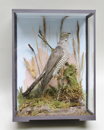 A VICTORIAN CUCKOO re-cased perched on a branch in a naturalistic setting before a painted back drop, in painted glazed display case, 41cm x 30cm
