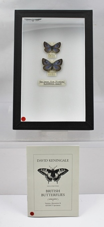 THE LARGE BLUE (M. arion) N. CORNWALL RACE MALE, Nth. CORNWALL 4.7.1920, G.B. OLIVER  FEMALE, Nth. Cornwall 4.7.1920, G.B. OLIVER Pair of fine specimens captured by this notable Collector