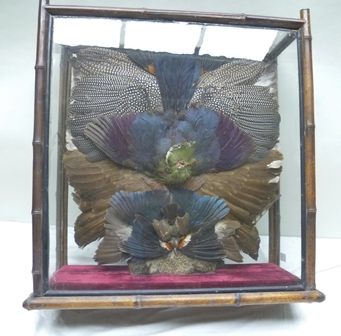 POSSIBLY ROWLAND WARD A 19TH/20TH CENTURY SCREEN OF WINGS BIRD SKINS IN THE FORM OF A TABLE SCREEN with a bamboo double sided glazed case, 66cm x 60cm