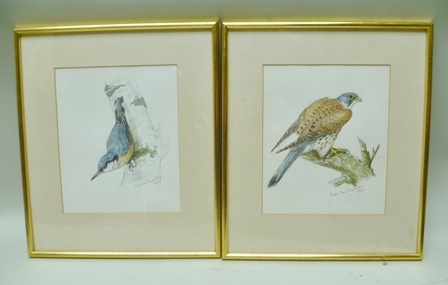 RUTH VAN RUYCKEVELT A study of a Kestrel and similar a Nuthatch, Watercolours, signed and dated 1985 and 1984, 24cm x 20cm each mounted in plain gilt glazed frames (2)