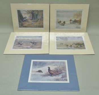 A SET OF SIX COLOURED LITHOGRAPHS, depicting ornithological studies of exotic birds amidst foliage, includes Palaeornis Luciani after J. Gould and H.C. Richter, Hullmandell & Walton impression, 53cm x 35cm mounted in green tinted and gilded glazed frames