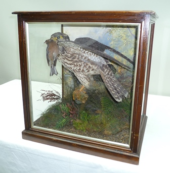AN EDWARDIAN PERIGRINE FALCON modelled with prey, perched on a branch, in naturalistic setting, painted back drop, in mahogany glazed display case, 50cm x 48cm
