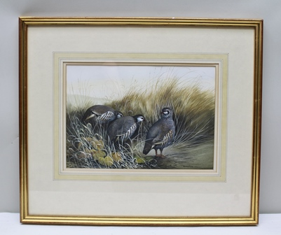 BERRISFORD HILL Red Legged Partridge amongst grasses, Watercolour painting, signed, 26cm x 38cm, in gilt frame, mounted and glazed