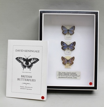 DAVID L. KENINGALE (Lepidopterist) WILDLIFE LICENCE TAXIDERMY SALES (Butterflies) Ref: CL07/2015/0003 THE LARGE BLUE (M.arion) N.CORNWALL RACE ABERRATION AND VARIETY (3 specimens) Male.ab.alconides N. Cornwall. W. Claxton vii, 10 (printed data label). Female.ab.magnifica, N. Cornwall. W. Claxton vii, 1910 (printed data label) Male.ab.ozernyi (colour form) N. Cornwall, 21.vi.1927, W. Claxton (handwritten data label) Fine examples, presented in glazed Watkins & Doncaster entomological caseand certificated with signed handwritten catalogue and licensing details