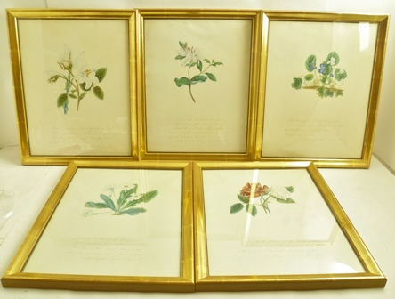A SET OF TEN FLOWERS OF SHAKESPEARE SERIES OF 19TH CENTURY WATERCOLOUR PAINTINGS, each a botanical study, inscribed beneath with a relevant quote from The Bard, includes; Holly, Violets etc., 32cm x 25cm, each gilt framed and glazed