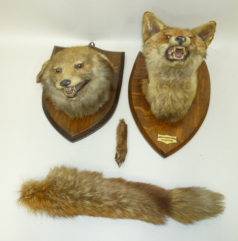PETER SPICER A FOX MASK on oak shield, Beaudesert Park, Dec 28th, 1934, and BRUSH, together with and unnamed VIXEN MASK, on oak shield